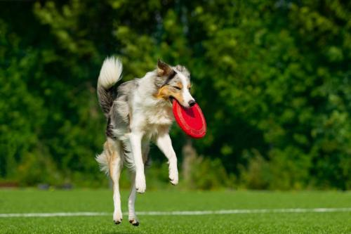 Jump! Catch! Frisbee Time