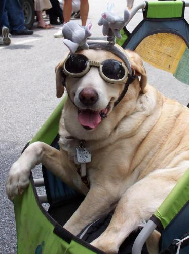 Happy Dog with Atlanta Goggles